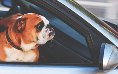 Keep Your Dog Safe When Travelling